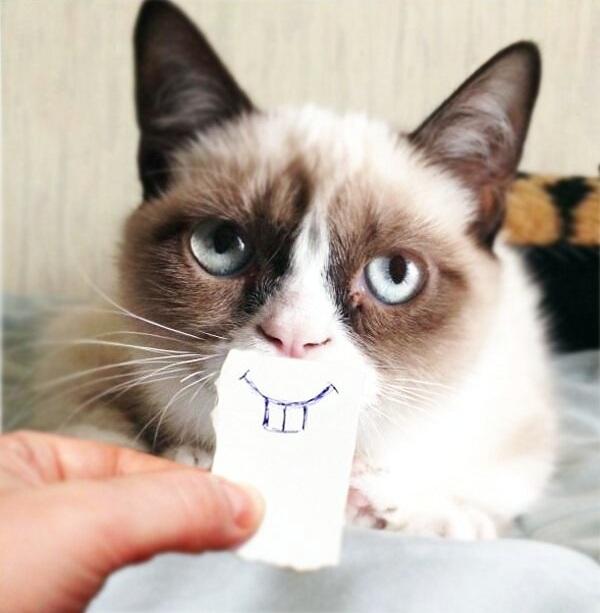 grumpy-cat-37.