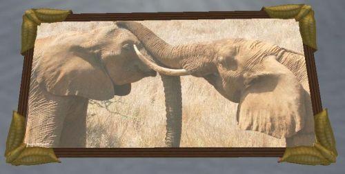 SN-ElephantsPhoto.